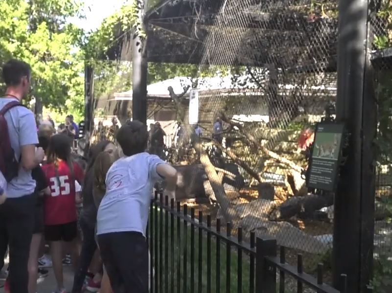 Riverside students help unveil bobcat name at Kansas Wildlife Exhibit at Riverside Park
